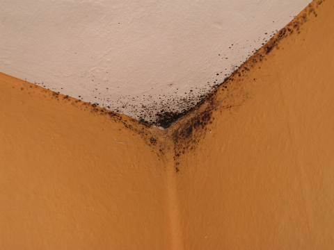 Roof Leaks Encourage Mold Growth Which Results In Serious Health Problems Fotolia Com Ter Pregizer