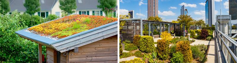 Links: Extensive Dachbegrünung, Rechts: Intensive Dachbegrünung