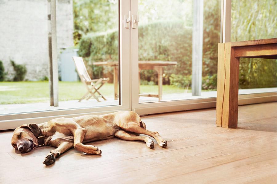 Smarte Sicherheitskomponenten wie von Bosch geben ein gutes Gefühl in den eigenen vier Wänden.