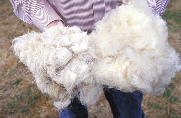 Schafwolle Dämmung